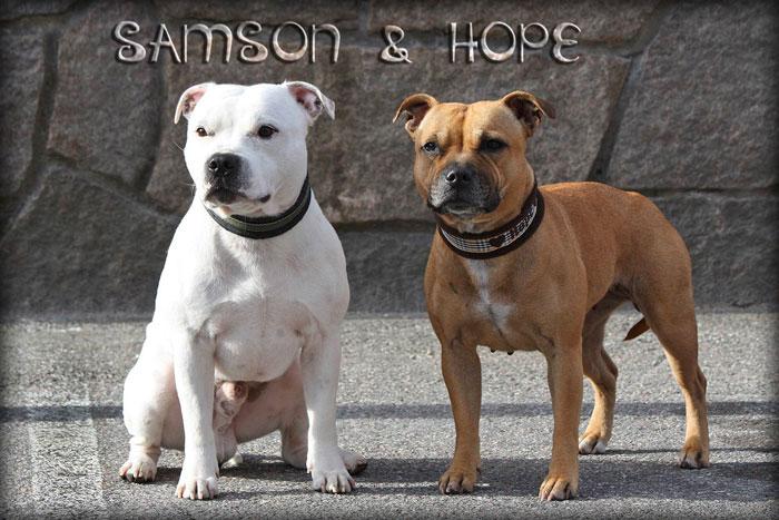 Hope & Samson 2013