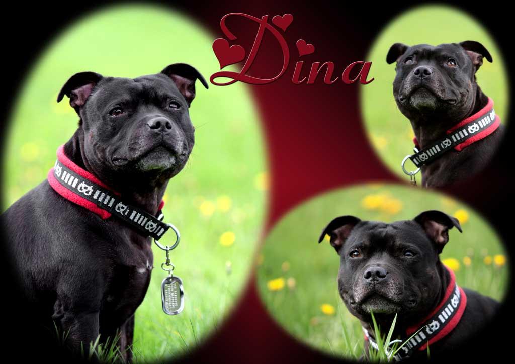Dina & Bam 2009