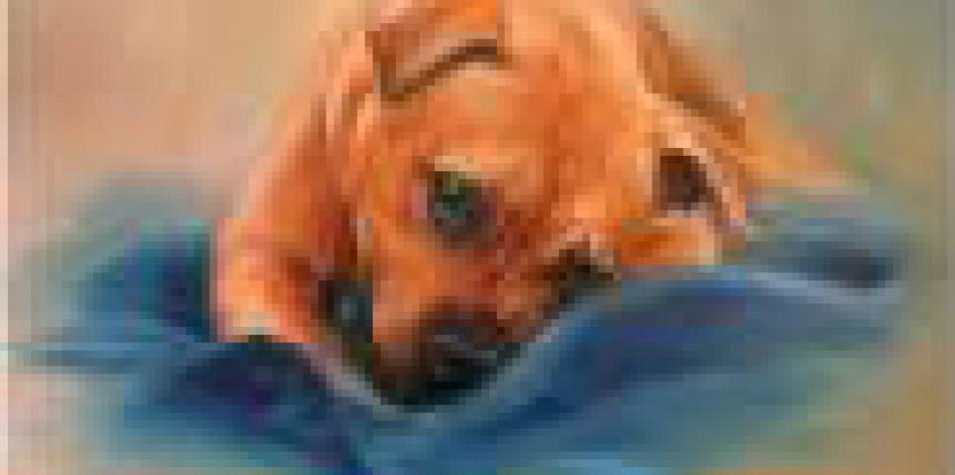pup-paint