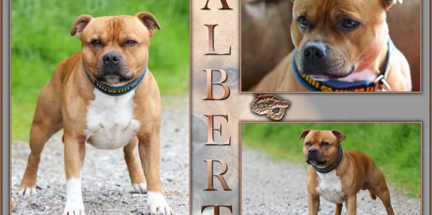hope-albert-2